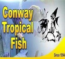 Conway Fish